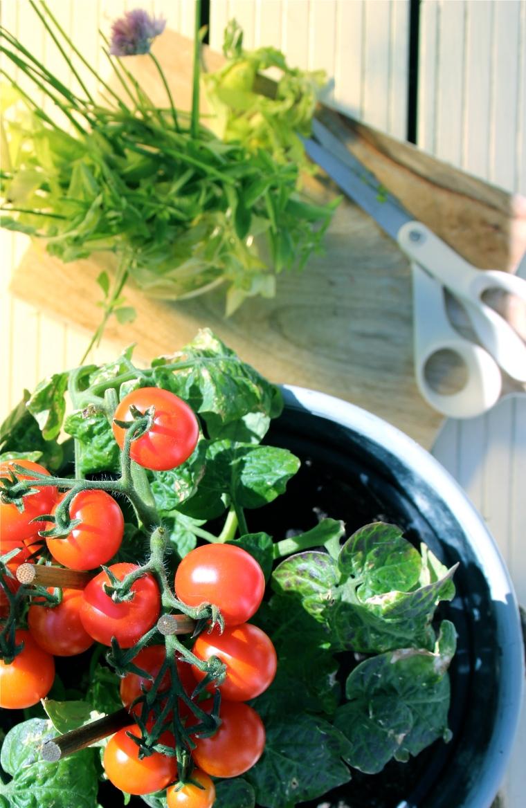 summer salad7