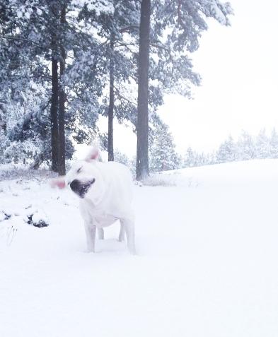 snowwalk7