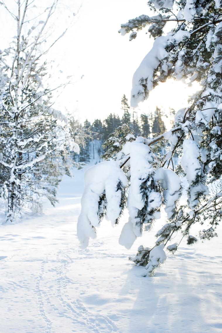 snow8-1-of-1