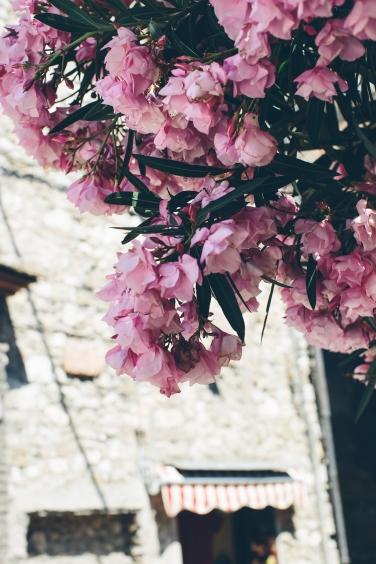 Narni blooms (1 of 1)