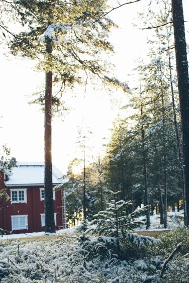 christmas tree hunt15 (1 of 1)